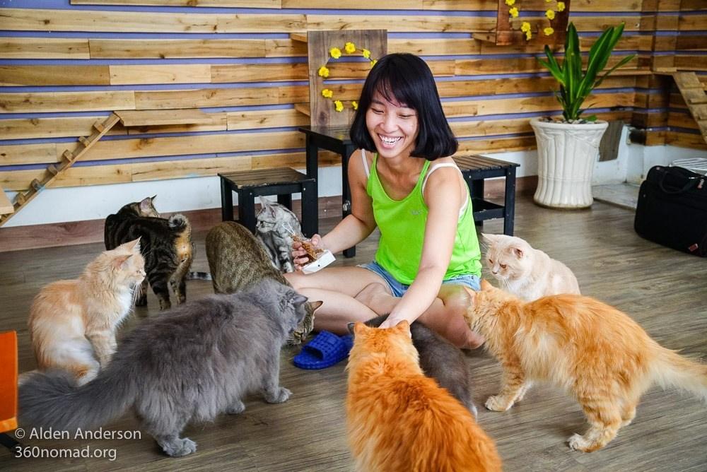 Mô hình quán cà phê thú cưng