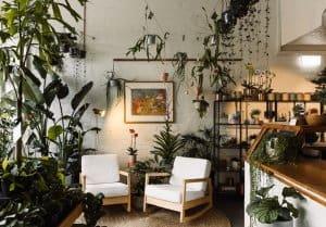Thêm cây xanh quán cafe
