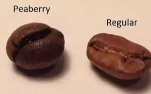 Hình dáng hạt cafe culi
