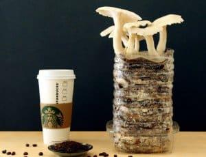bã cà phê trồng nấm