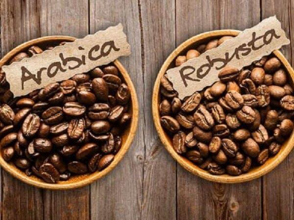 11 Điểm khác biệt giữa hai dòng cà phê Arabica và Robusta