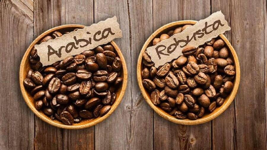 Cà phê Arabica và Robusta – 11 Điểm khác biệt giữa hai dòng cafe