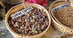 Hạt cà phê chồn