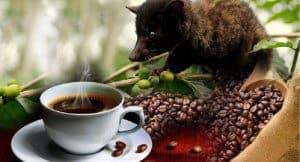 cà phê chồn ngon