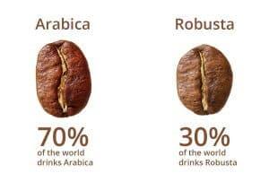Hình dáng hạt cafe