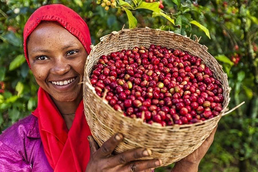 Vùng trồng cafe Arabica trên thế giới