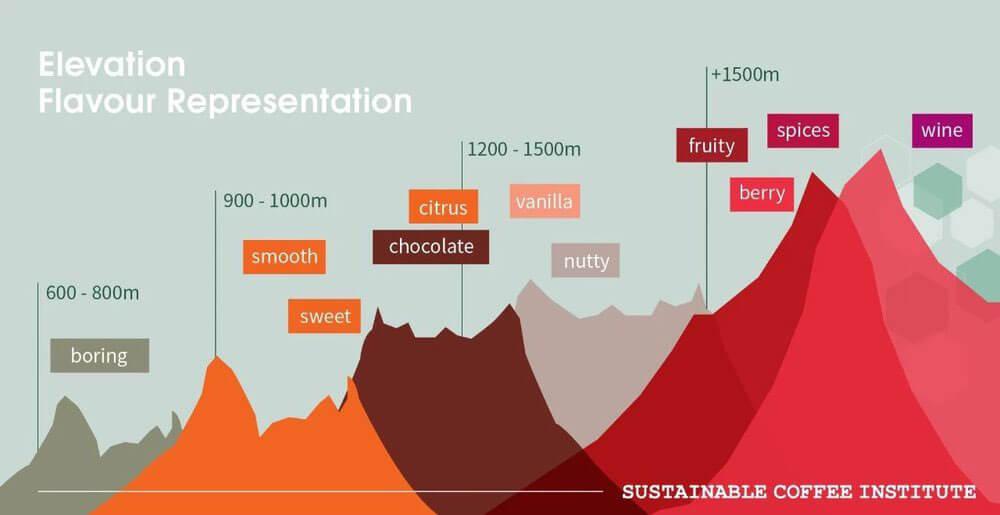 Độ cao ảnh hưởng đến chất lượng hạt cà phê